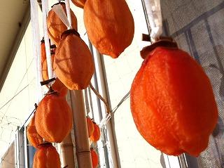 干し柿がひなたぼっこをしています