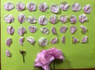 リレーメッセージ「八重桜」の写真です